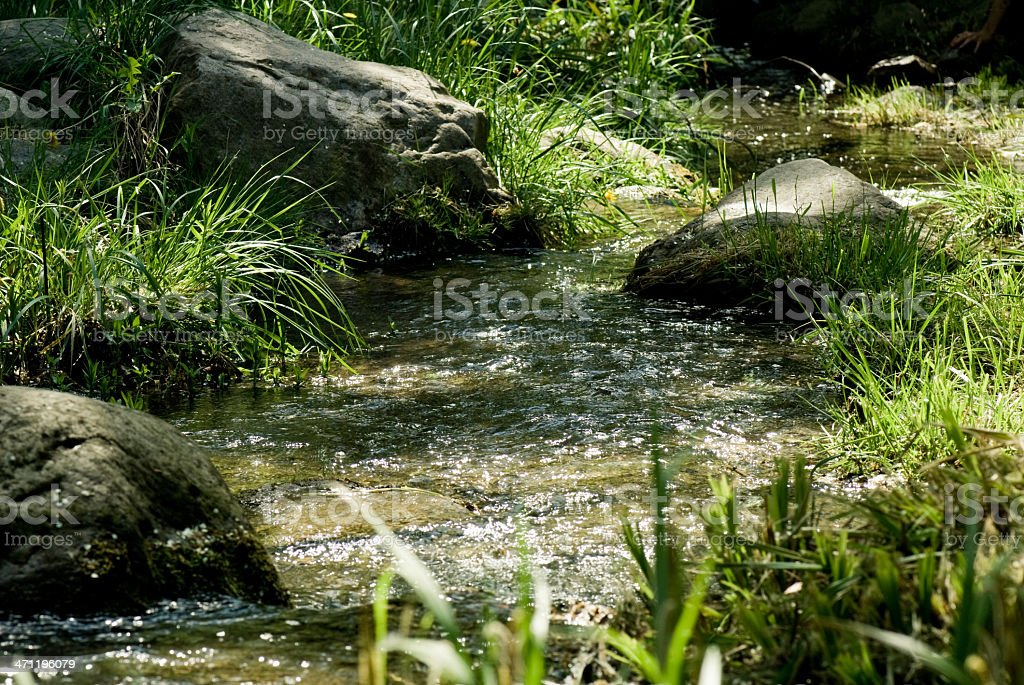 Small natur rivulet royalty-free stock photo