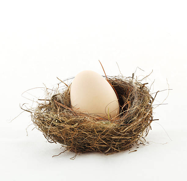 Small nest with big egg stock photo