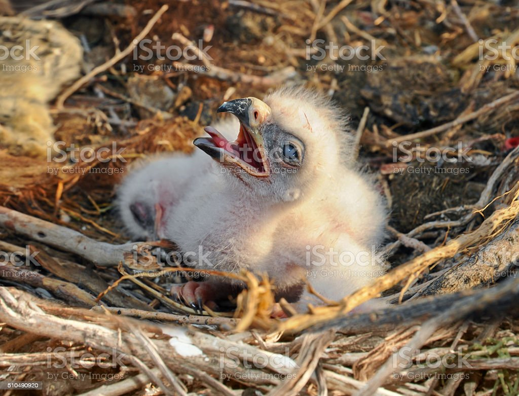 small nestling in the nest stock photo