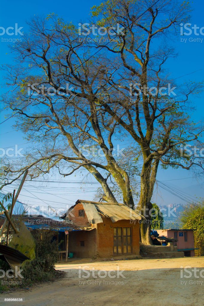 Small Old House Under Tree Stock Photo Download Image Now Istock