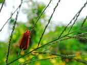 Small orange insects are on green leaves.