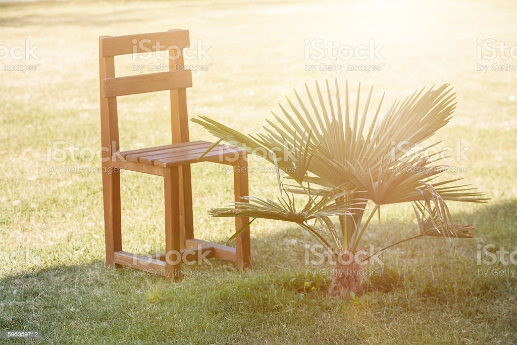 small palm next to the chair at green grass royalty-free stock photo