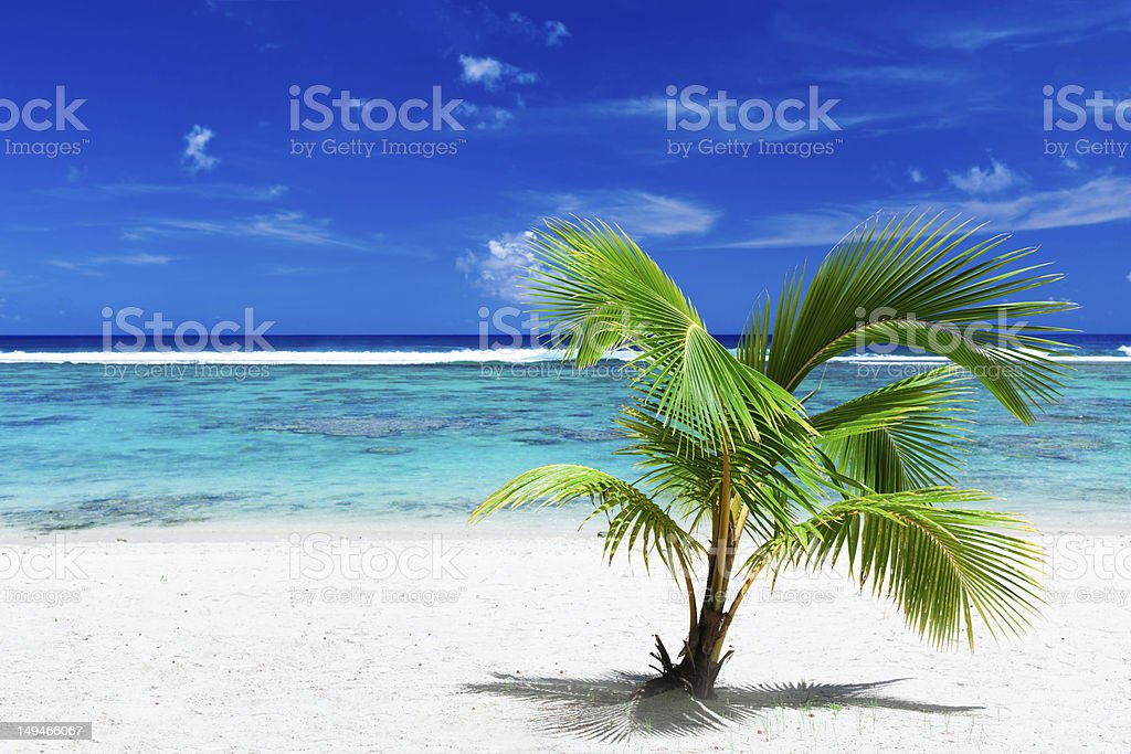 Small palm tree hanging over stunning blue lagoon royalty-free stock photo