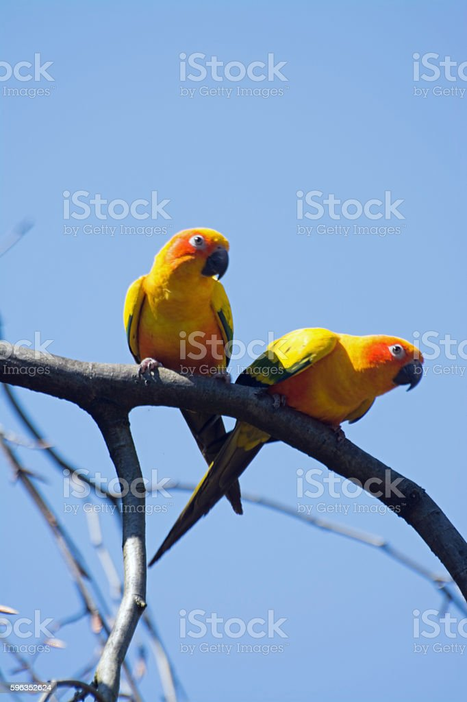Small Parrot royalty-free stock photo