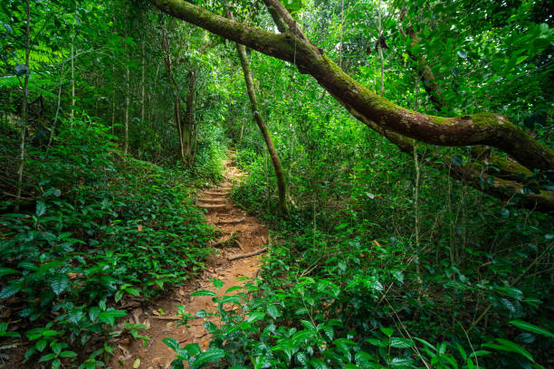 Kleiner Pfad im tropischen Wald – Foto