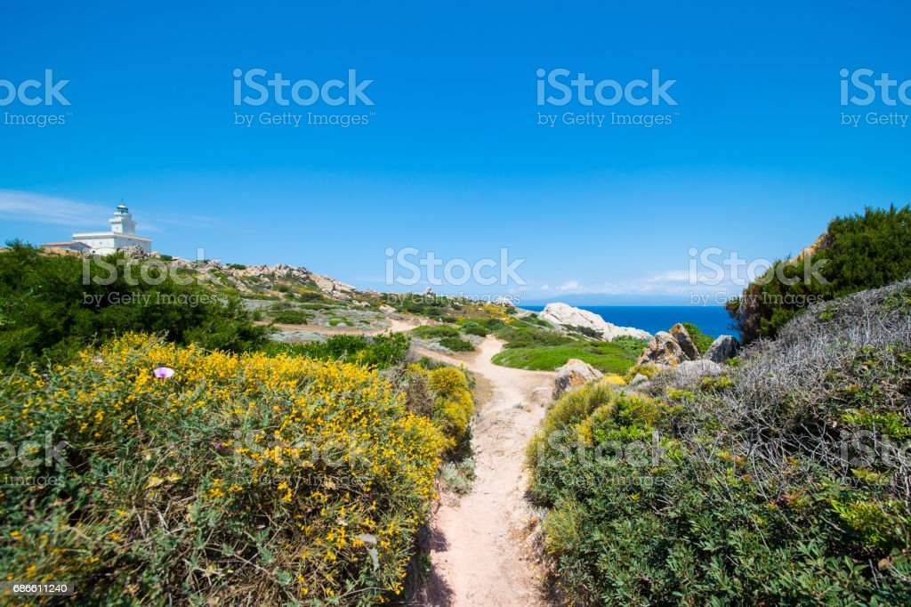 Small pathway to the beach surrounded by beautiful pink flowers. royalty-free stock photo