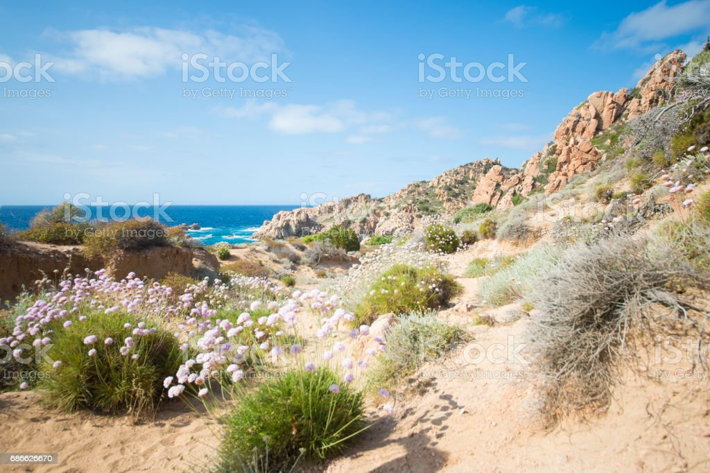 Small pathway to the beach surrounded by beautiful pink flowers. (selective focus) photo libre de droits
