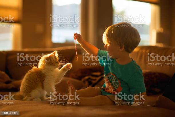 Small persian cat playing with little boy picture id908671912?b=1&k=6&m=908671912&s=612x612&h=sy4ydx1xlaixembf74qrnlpaaljurh8byuqy6ecc72w=