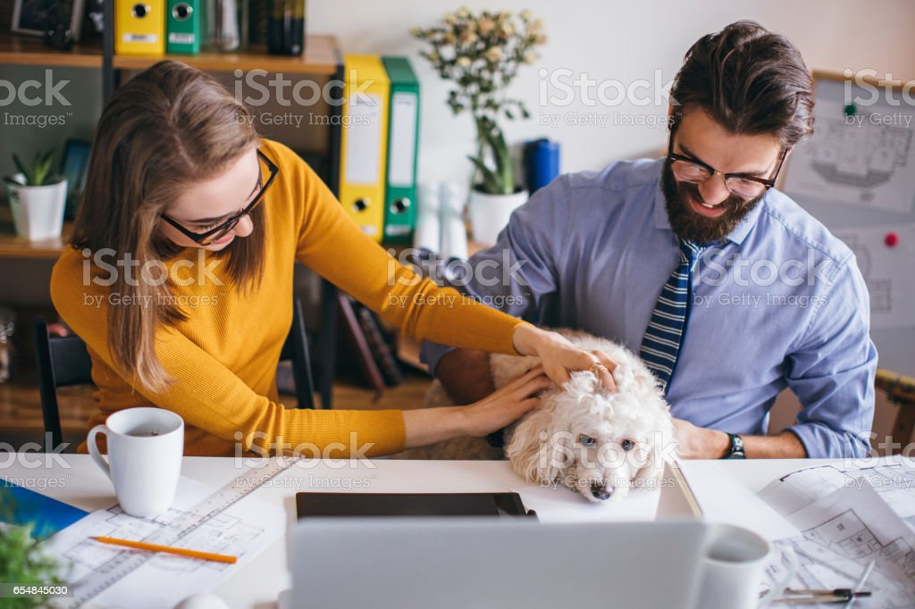 Small pet friendly office stock photo