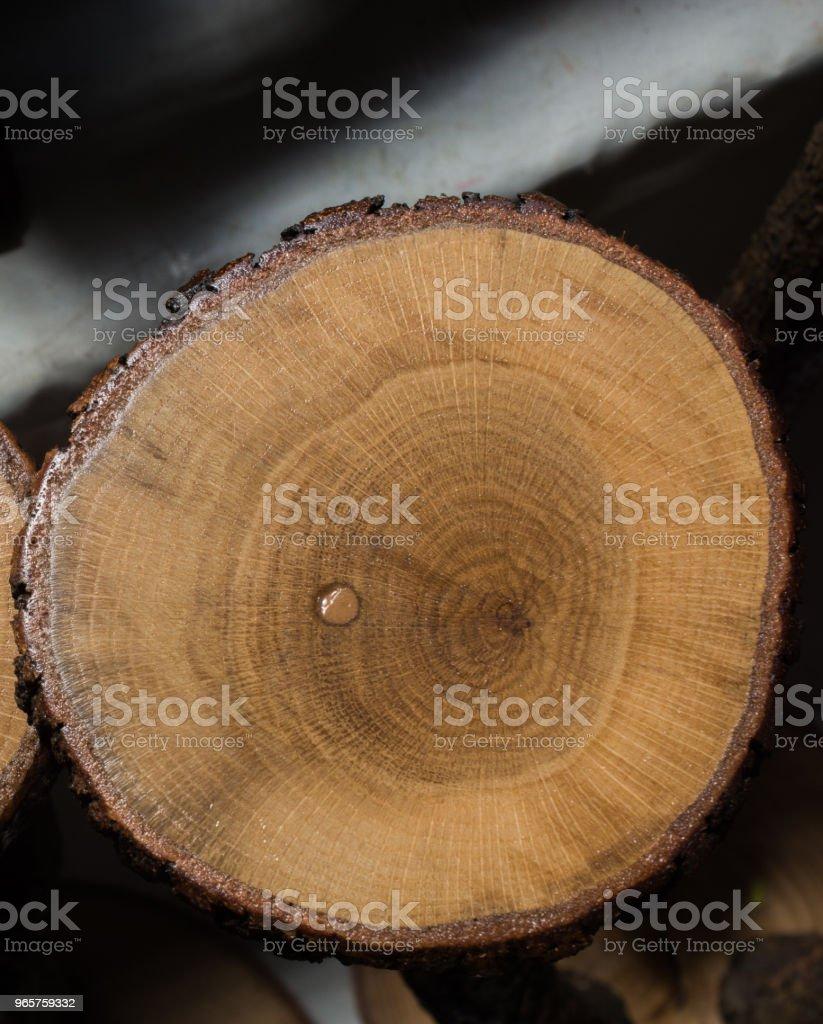 Klein stukje van gesneden houten log in ronde vorm - Royalty-free Achtergrond - Thema Stockfoto
