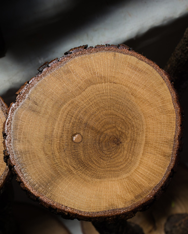Klein Stukje Van Gesneden Houten Log In Ronde Vorm Stockfoto en meer beelden van Achtergrond - Thema