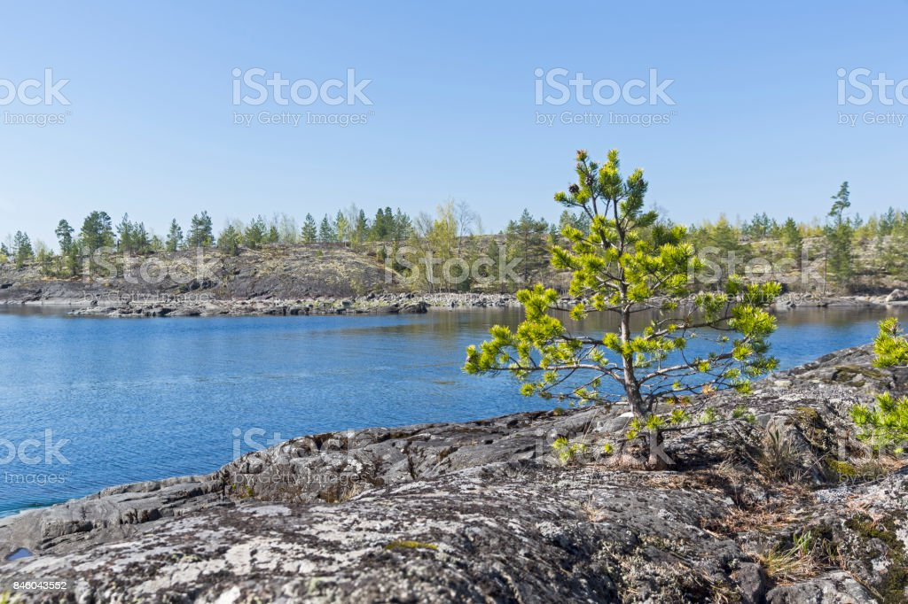 A small pine on the rocky shore of the Ladoga Lake. stock photo