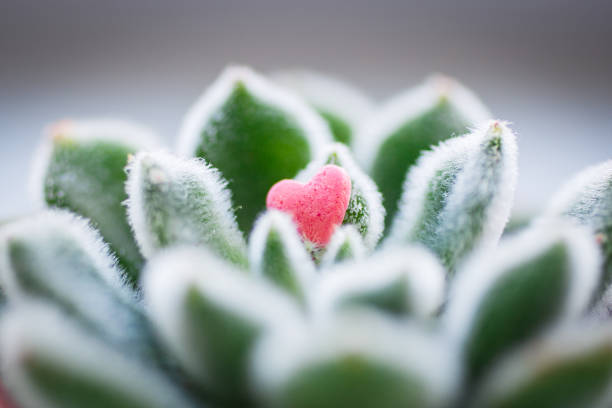 Small pink candy Heart lying on shaggy green leafs stock photo