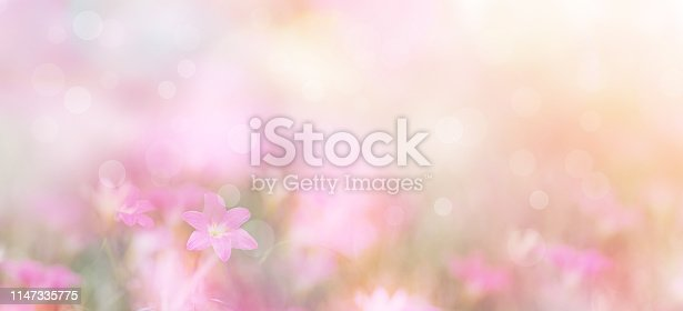 Abstract floral backdrop of small pink flowers over pastel colors with soft style for spring or summer time. Banner background with copy space.