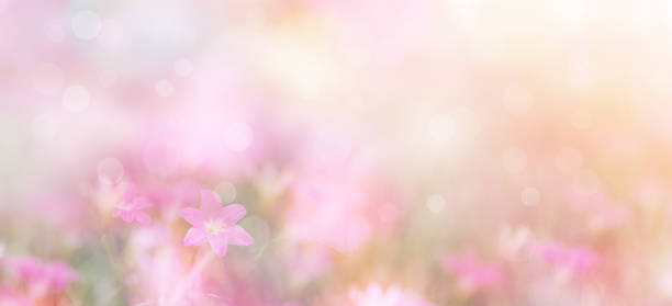 small pink flowers over pastel colors Abstract floral backdrop of small pink flowers over pastel colors with soft style for spring or summer time. Banner background with copy space. flowers stock pictures, royalty-free photos & images