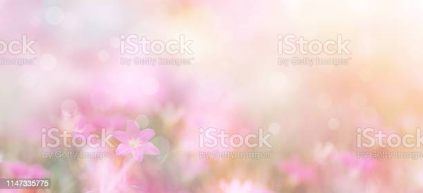 Photo of small pink flowers over pastel colors