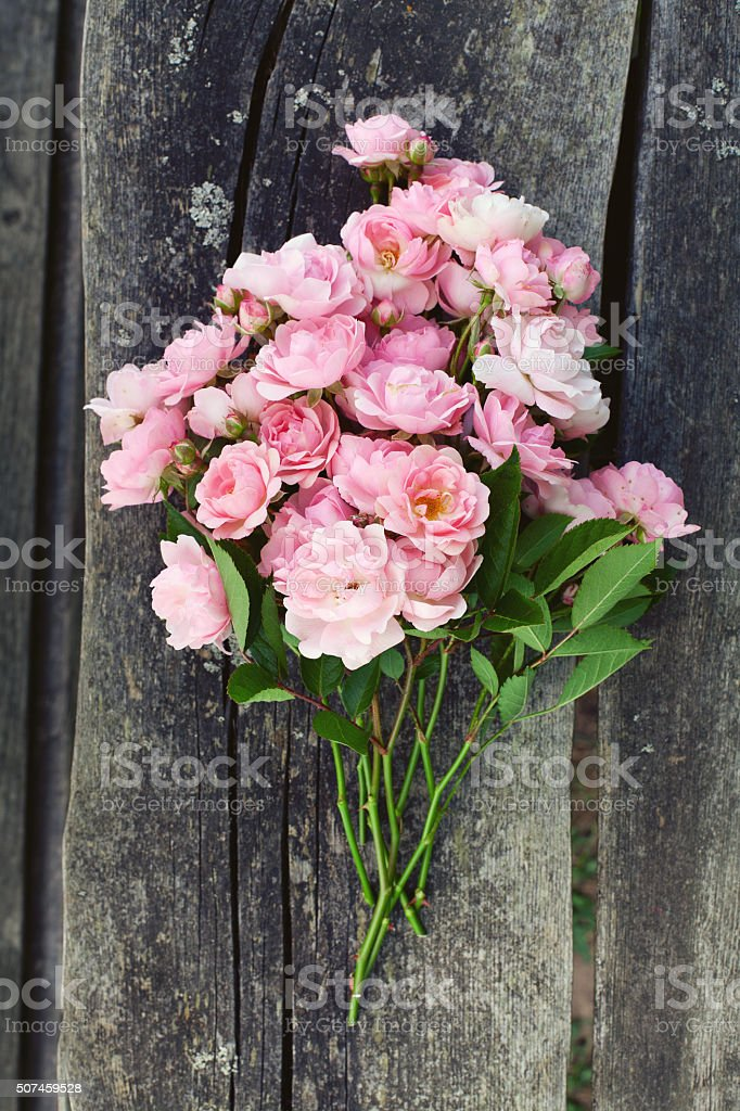 small pink garden roses on wooden surface stock photo