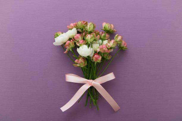 roze roosjes - caernarfon and merionethshire stockfoto's en -beelden