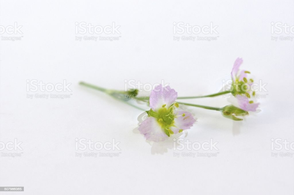 Small pink wild flower stock photo