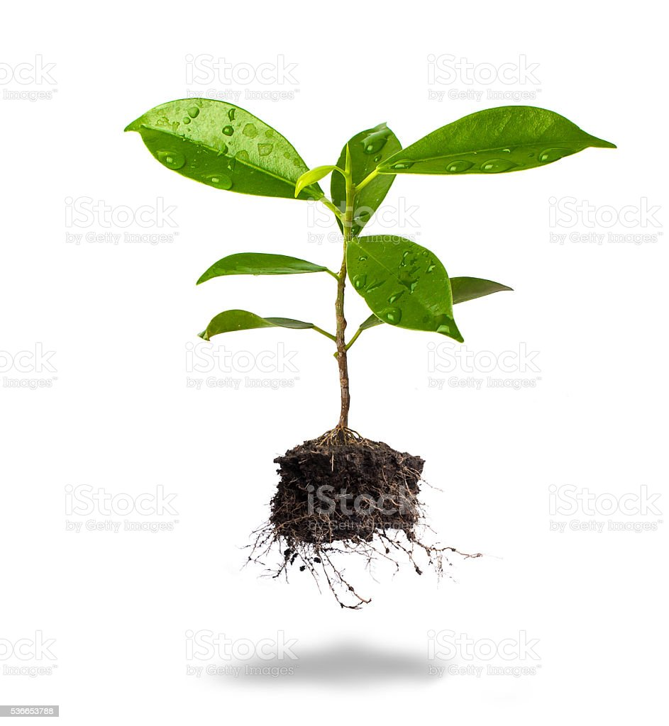 Small plant and soil on white background. Safe tree concept stock photo