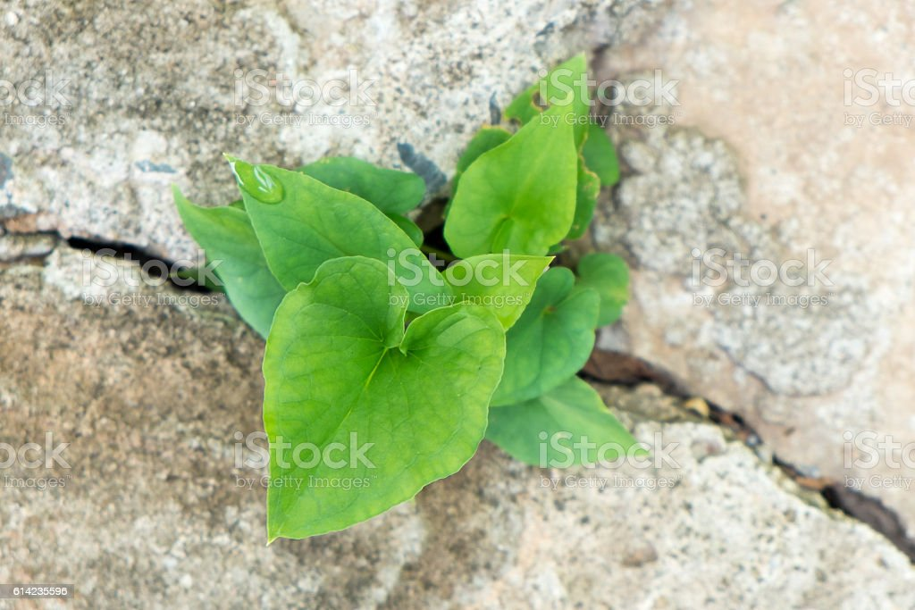 small plant breaking out from cement ground stock photo