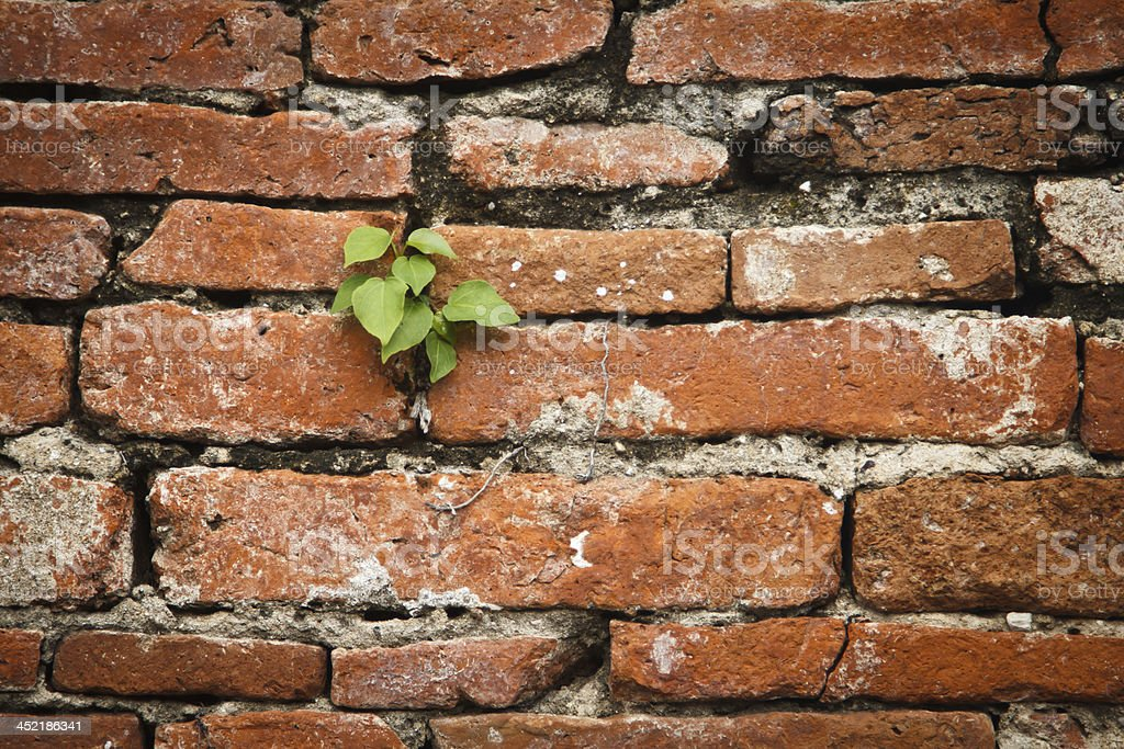 small plant growing from old bricks wall royalty-free stock photo