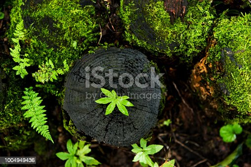 istock Small plant growing from old stump 1004949436