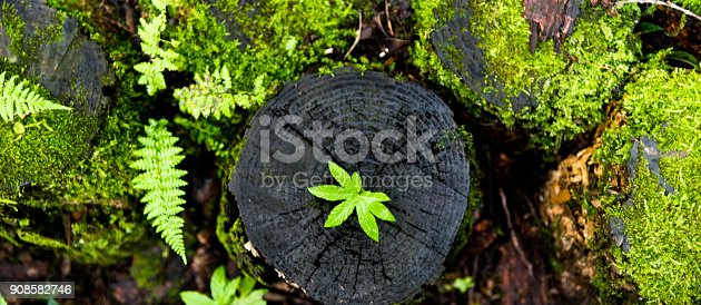 istock Small plant growing from old stump 908582746