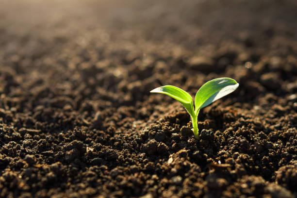 Kleine Pflanze im Garten bei Sonnenschein – Foto