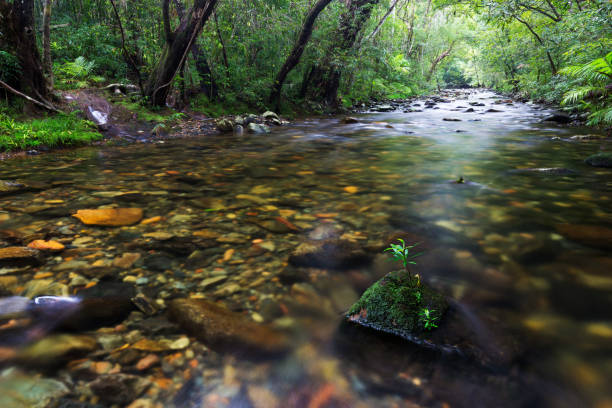 A Small Plant Growing on a Mossy Rock in a Rain Forest Stream stock photo