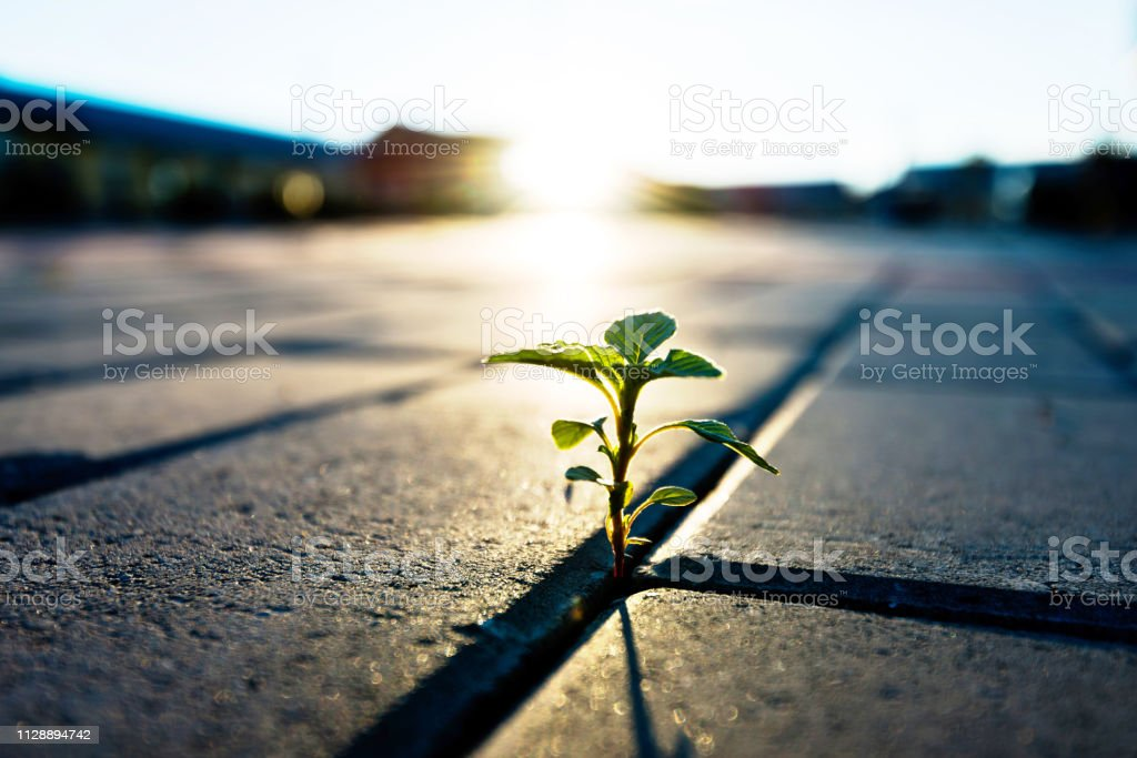 Small plant growing on brick floor Small plant growing on brick floor Adversity Stock Photo