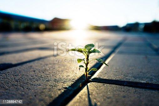 Small plant growing on brick floor