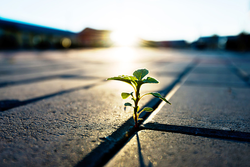 Small Plant Growing On Brick Floor Stock Photo - Download Image Now