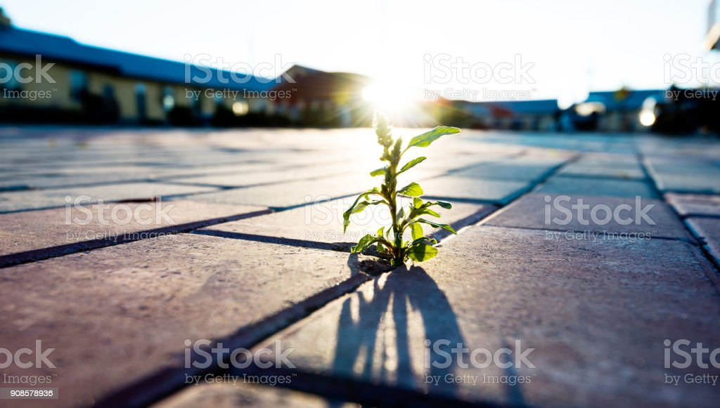 Small plant growing on brick floor stock photo