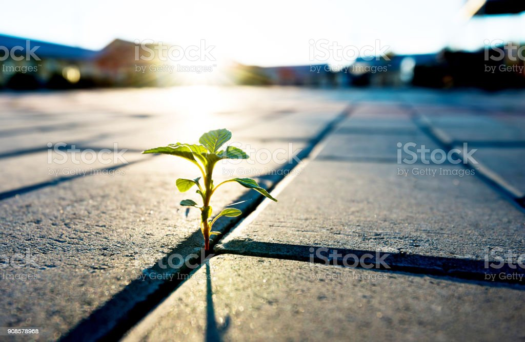 Pequeña planta que crece en el piso de ladrillo - foto de stock