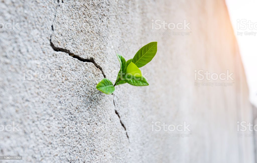 Small plant growing on concrete wall royalty-free stock photo