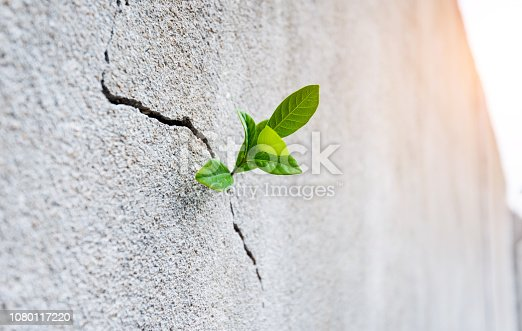 Small plant growing on concrete wall.