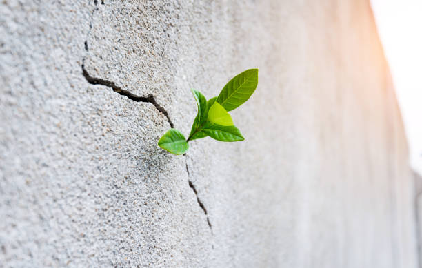 Small plant growing on concrete wall Small plant growing on concrete wall. emergence stock pictures, royalty-free photos & images