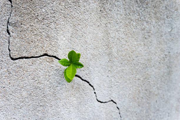 mała roślina rosnąca na betonowej ścianie - nadzieja zdjęcia i obrazy z banku zdjęć