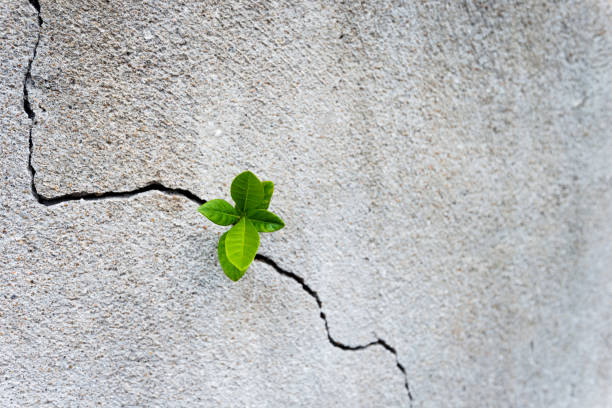 small plant growing on concrete wall - optimistic zdjęcia i obrazy z banku zdjęć