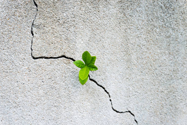 Small plant growing on concrete wall stock photo