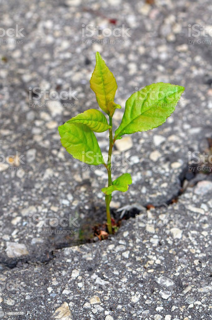 Small plant growing through cracked asphalt on the ground royalty-free stock photo