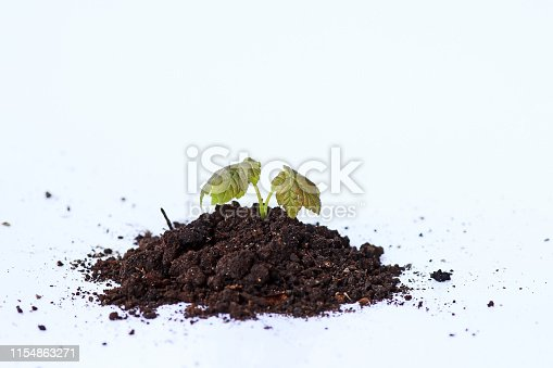 147512291 istock photo A small plant grows out of the earth. Plant with soil on white background 1154863271