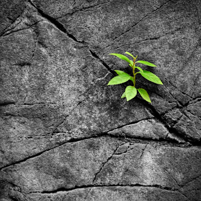 Young green plant growing up on the rock and stone.