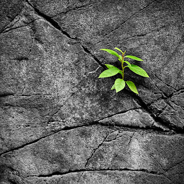 Small plant growth in the rocks stock photo