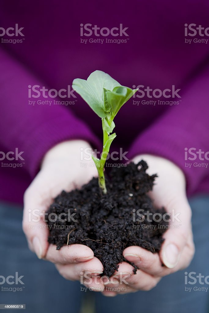 Small Plant Held in Hands stock photo