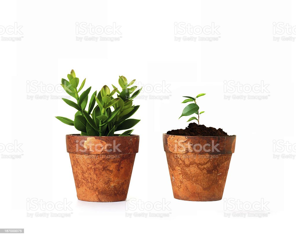 small plant in a vase royalty-free stock photo
