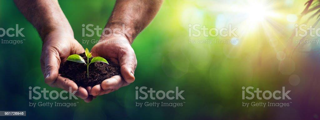 Kleine Anlage In alte Hasen - Garten-Hintergrund – Foto