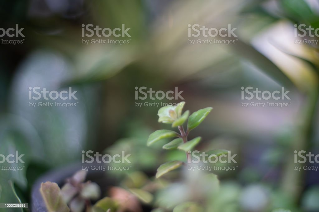 small plant nature in the nature backgorund , plant growth stock photo