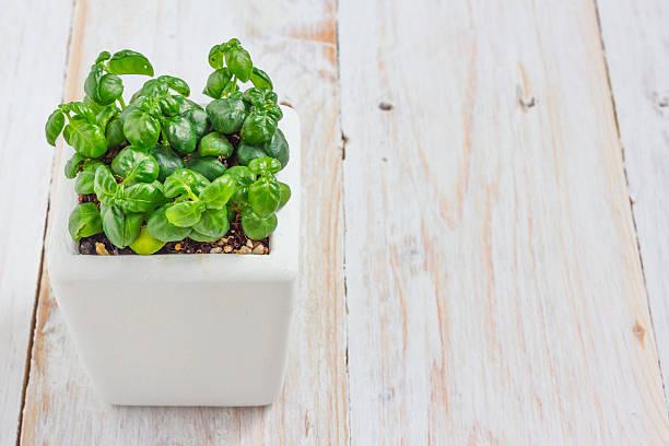 Kleine Pflanze. – Foto